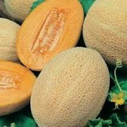 Rockmelon Hales Best Seed Packet Organically Certified