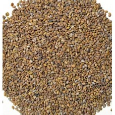 Alfalfa / Lucerne Seed for Sprouting Bulk Quantities