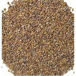 Seed Alfalfa / Lucerne for Sprouting Bulk Quantities