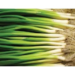Shallots Spring Onion Seed Packet Organically Certified - NOT TAS or WA