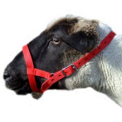 Sheep Webbing Halter - Large