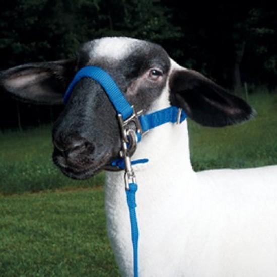 Sheep Webbing Halter - Small suit lambs, small sheep