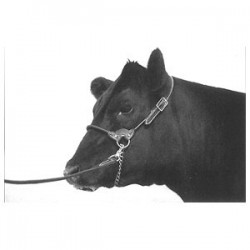 Show Halter Black Leather Round Strap - Cattle Calf Cow Bull