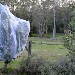 Standard Fruit Saver Garden Net for Fruit Trees and Vegetables