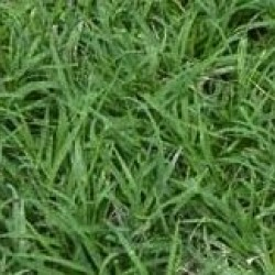 Supertuff Couch Grass Seed with Fertiliser