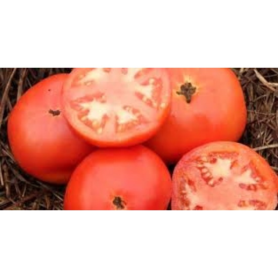Tomato Flora Lou Seed Packet Organically Certified
