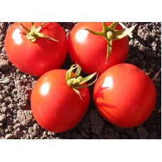 Tomato Tropic Seed Packet Organically Certified