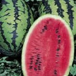 Watermelon Warpaint Seed Packet Organically Certified