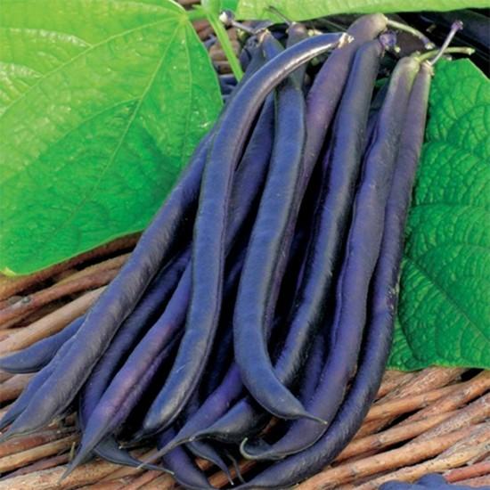 Royal Burgundy Bean Seed