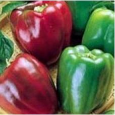 Capsicum Californian Wonder Seed Packet Organically Certified