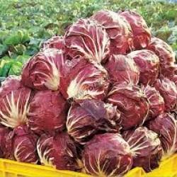 Chicory  / Radicchio Palla Rosa Seed