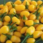 Chilli - Yellow Jelly Bean Organically Certified