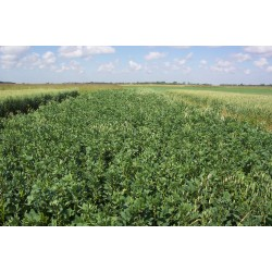 Bulk Green Manure Mix Seed Autumn Winter Variety Organically Certified
