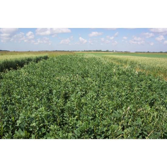 Green Manure Mix Seed Autumn Winter Variety Organically Certified Bulk Packs