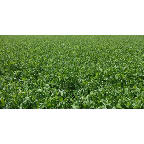 Green Manure Mix Seed Packet Spring Summer Variety Organically Certified