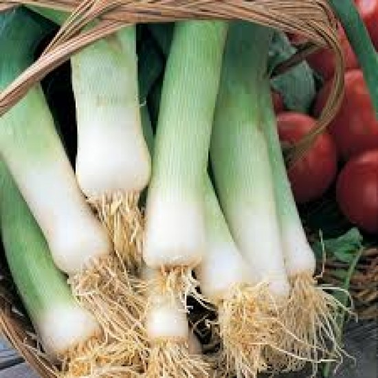 Leek Musselburgh Organically Certified Seed