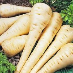 Parsnip Hollow Crown Seed Packet Organically Certified
