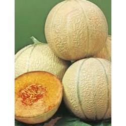 Planters Jumbo Rockmelon Organically Certified