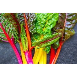 Silverbeet Rainbow Chard Organically Certified Seed