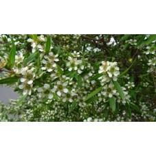 Tea Tree Lemon Scented Seed Packet Organically Certified