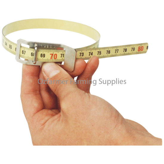 Scrotal Measuring Tape